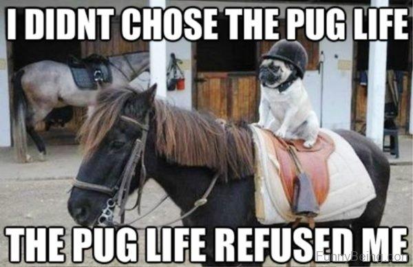I Didnt Chose The Pug Life