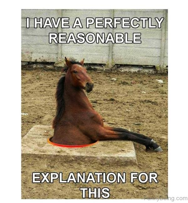 I Have A Perfectly Reasonable 80 super funny horse memes,Funny Barn Memes