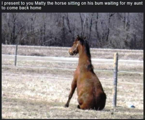 I Present To You Matty The Horse
