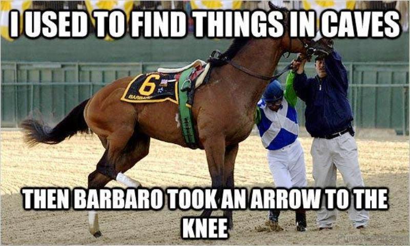 80 Super Funny Horse Memes
