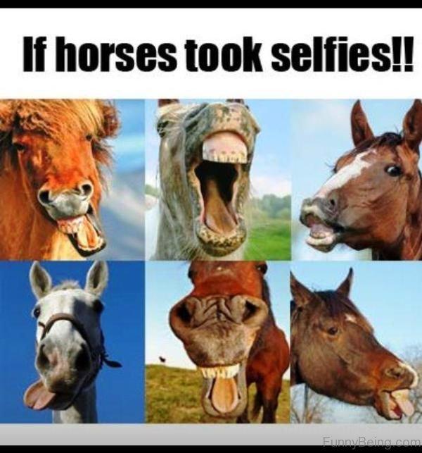 If Horses Took Selfies