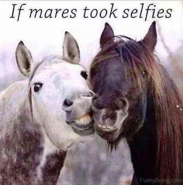 If Mares Took Selfies