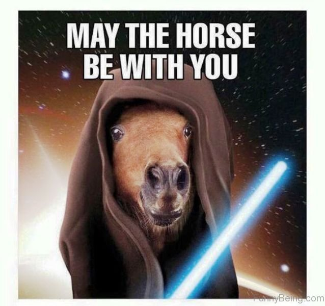 May The 4th Be With You Deals: 80 Super Funny Horse Memes