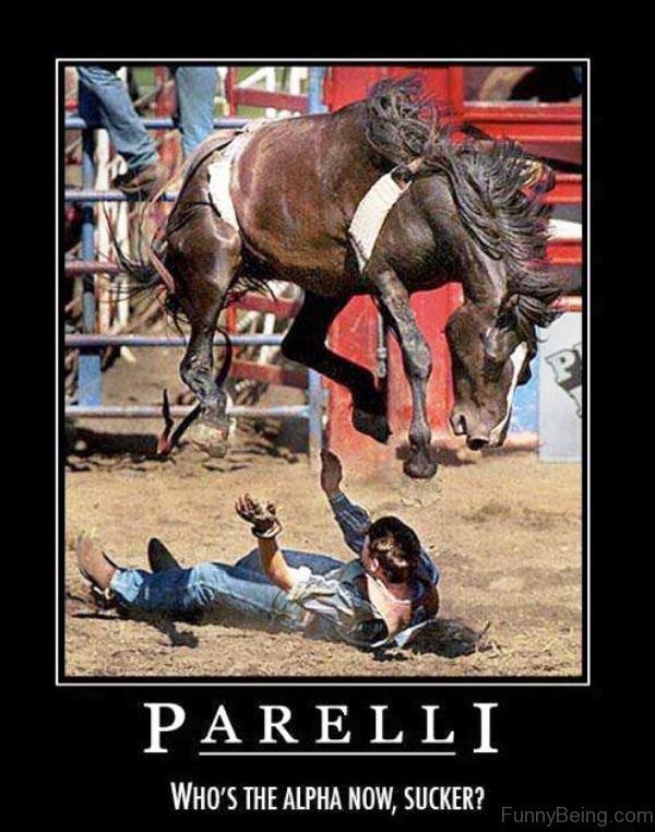 Parelli Whos The Alpha Now
