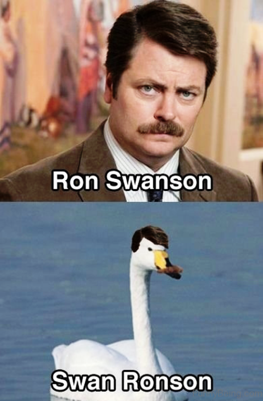 Ron Swanson Vs Swan Ronson