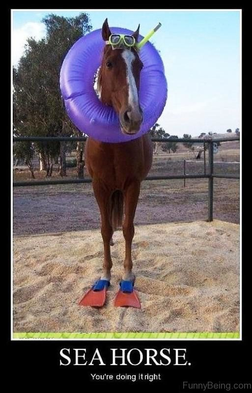 Sea Horse You re Doing It Right