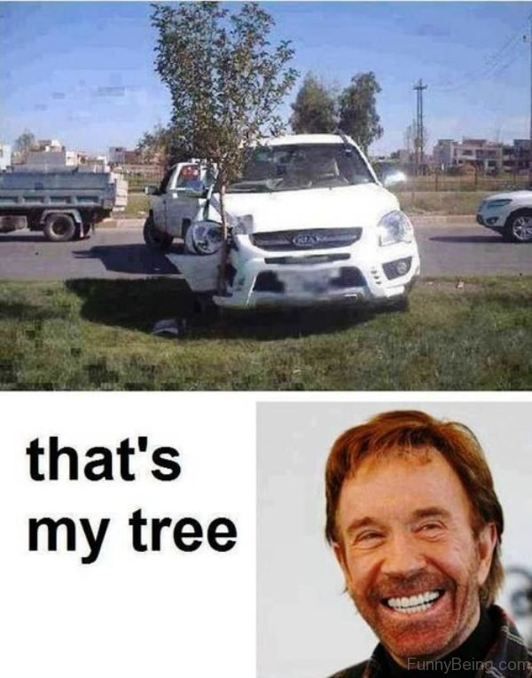 Thats My Tree