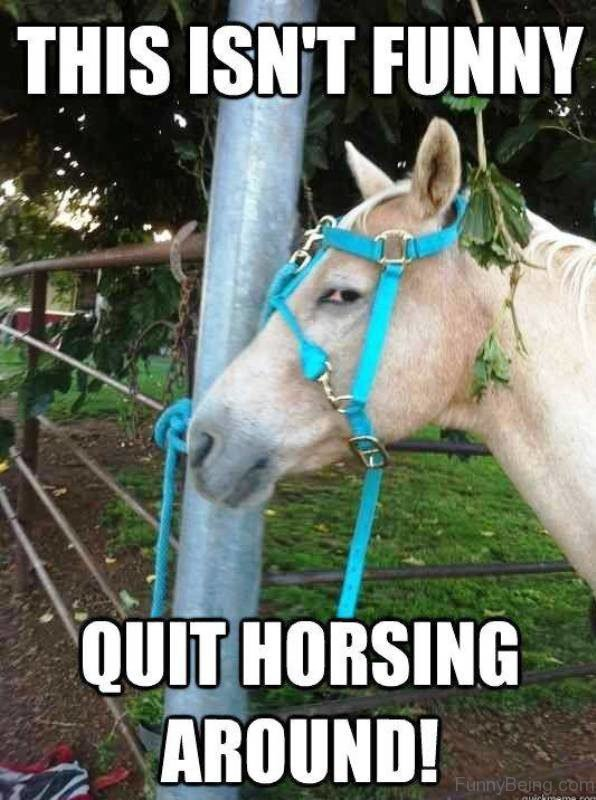 This Isnt Funny Quit Horsing Around