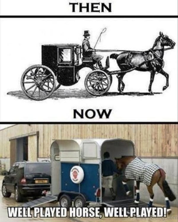 Well Played Horse Well Played