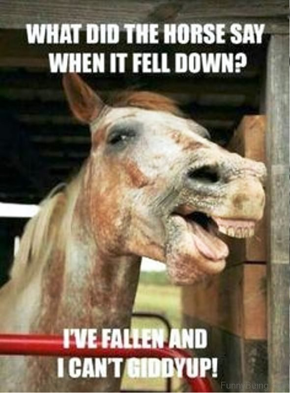 What Did The Horse Say