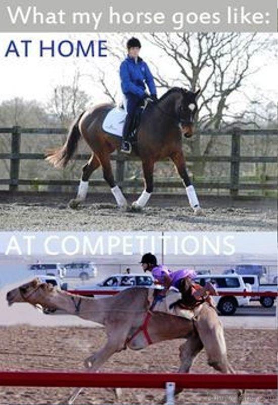 What My Horse Goes Like