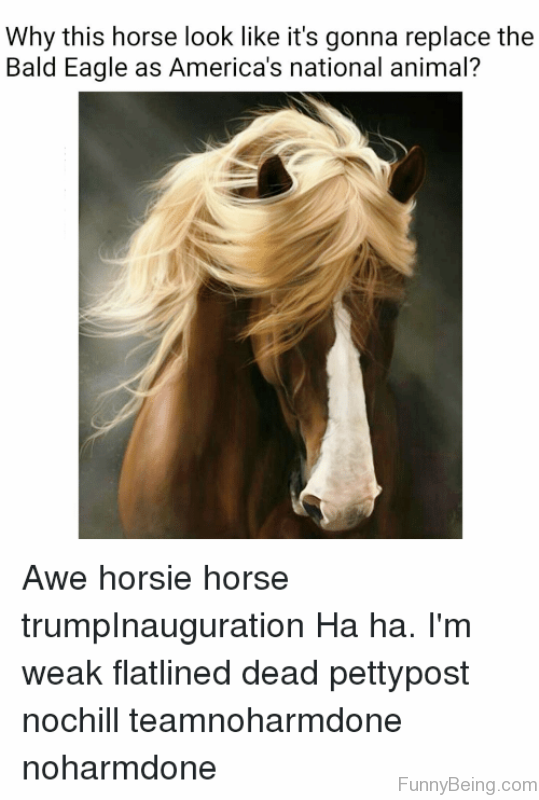 Why This Horse Look Like Its Gonna Replace