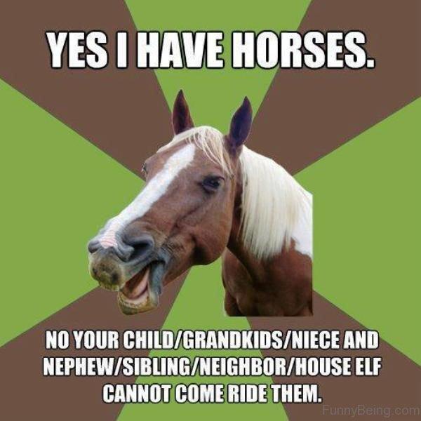 Yes I Have Horses