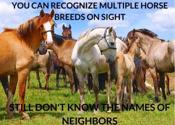 You Can Recognize Multiple Horse Breeds