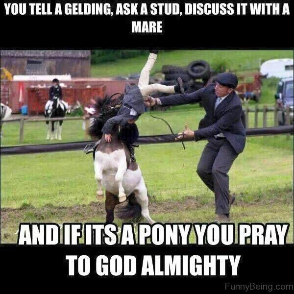 Funny Pony Quotes: 83 Foolish Horse Memes