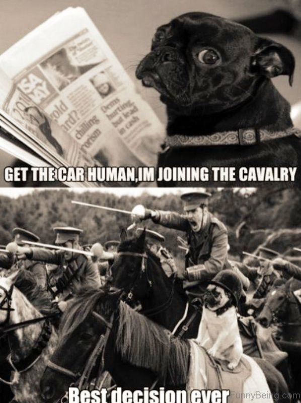 Get The Car Human Im Joining The Cavarly