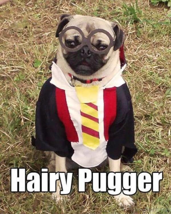 Hairy Pugger