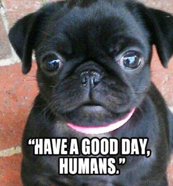 Have A Good Day Humans