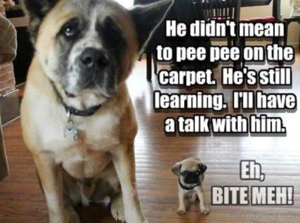 He Didnt Mean To Pee Pee