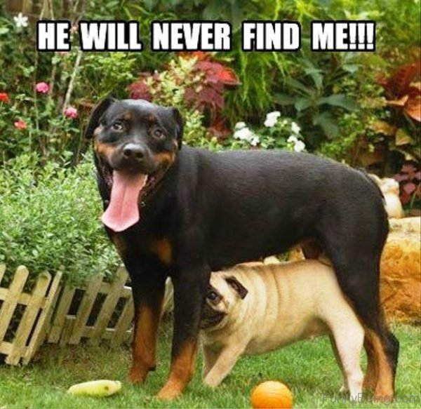 He Will Never Find Me