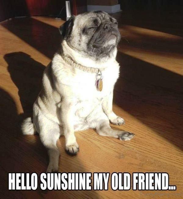 Hello Sunshine My Old Friend