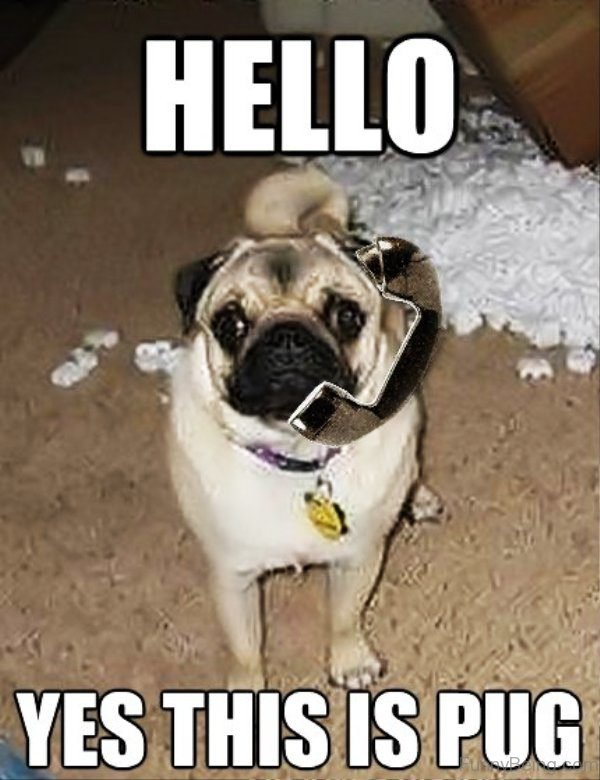 Hello Yes This Is Pug