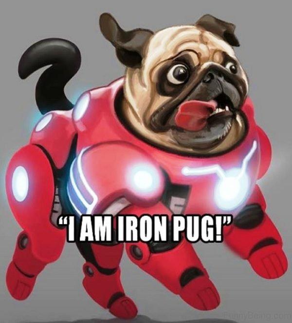 I Am Iron Pug