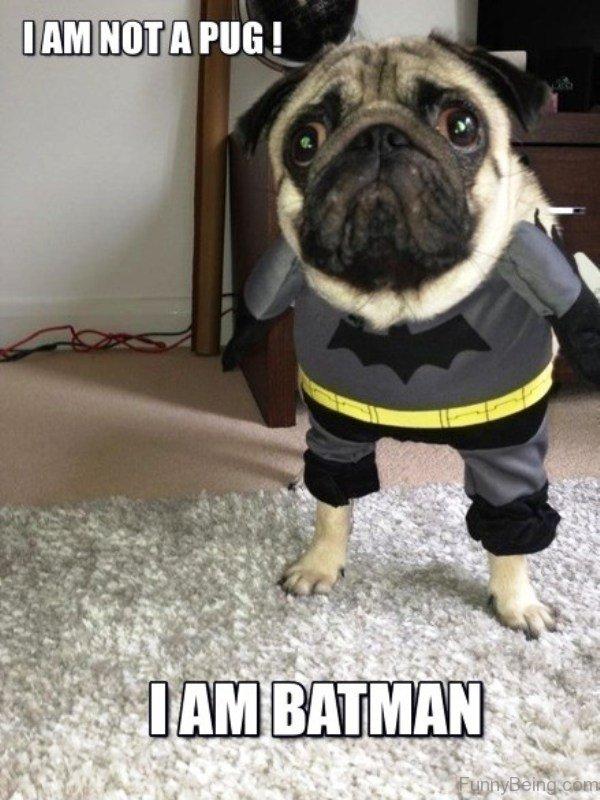 I Am Not A Pug