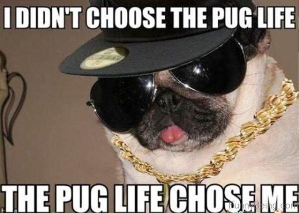 I Didnt Choose The Pug Life