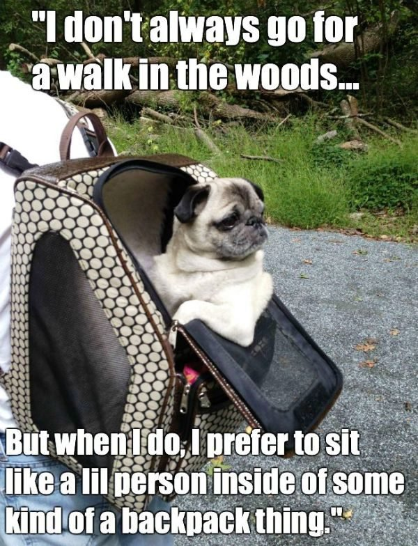 I Dont Always Go For A Walk In The Woods