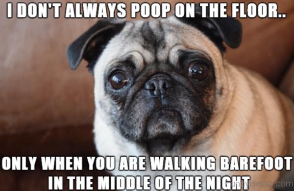 I Dont Always Poop On The Floor