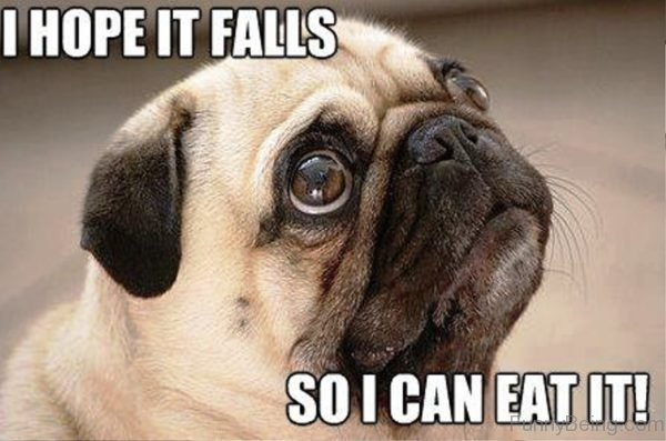 I Hope It Falls