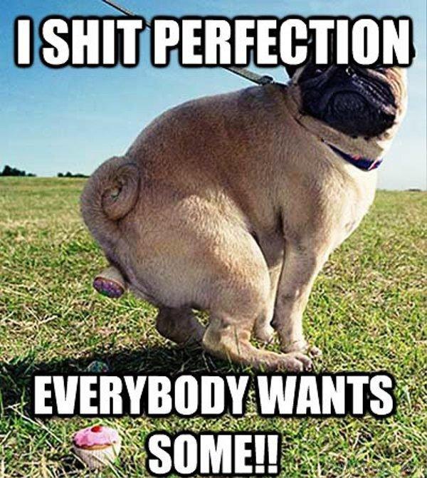 I Shit Perfection