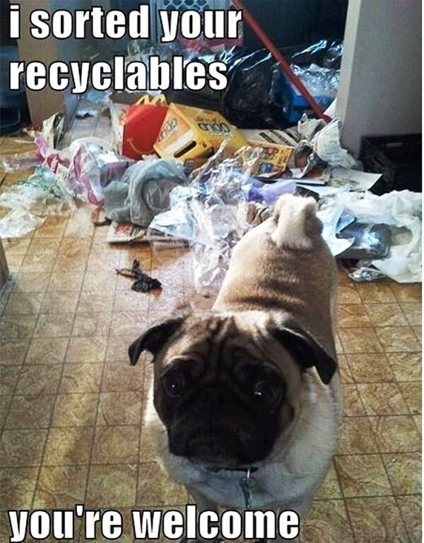 I Sorted Your Recyclables