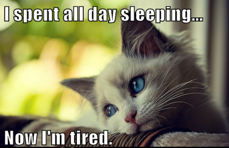 70 Most Awesome Sleep Memes