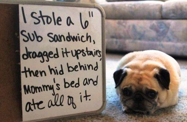 I Stole A Lo Sub Sandwich