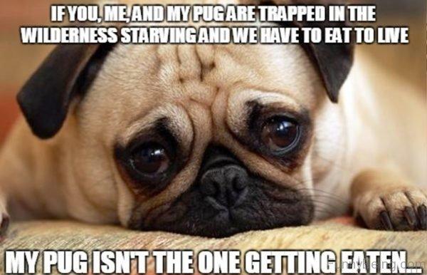 If You Me And My Pug