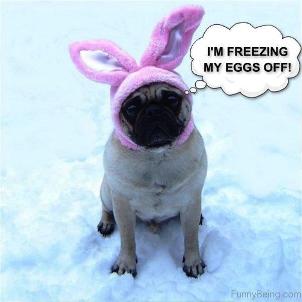 Im Freezing My Eggs Off