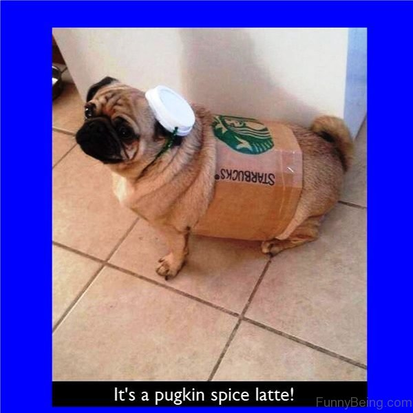 Its A Pugkin Spice Latte