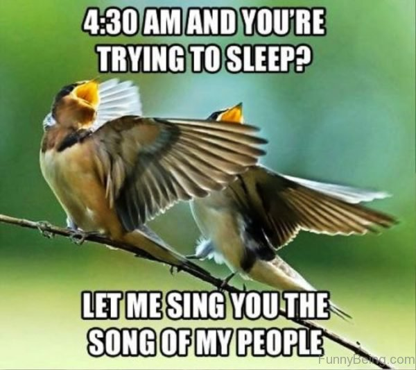 Let Me Sing You The Song Of My People