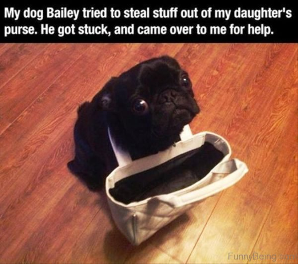 My Dog Bailey Tried To Steal Stuff Out