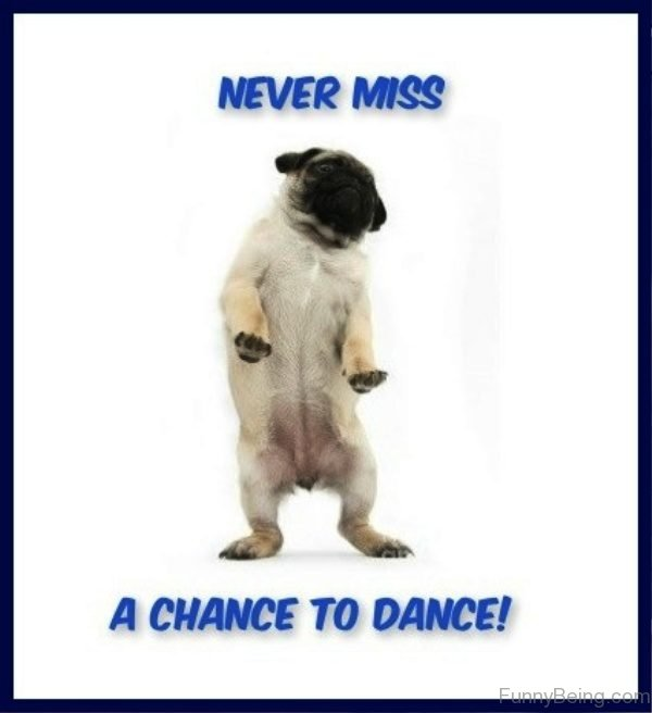 Nevr Miss A Chance To Dance
