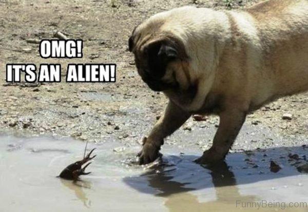 OMG Its An Alien