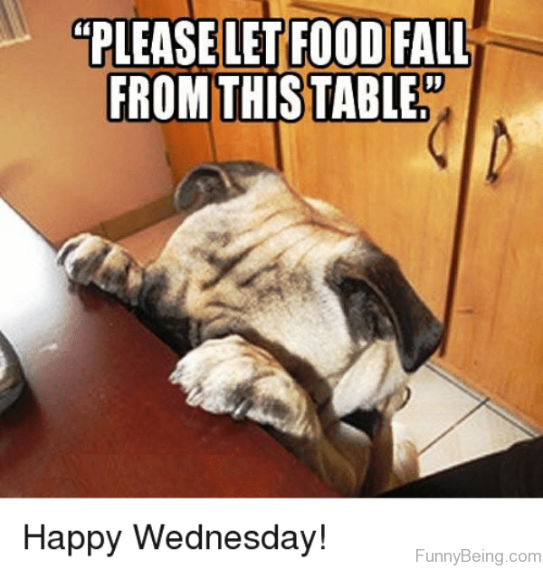 Please Let Food Fall From This Table