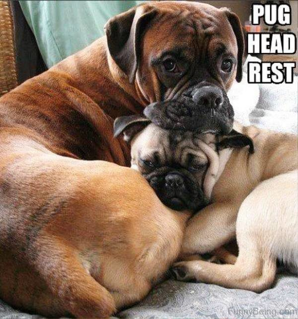 Pug Head Rest