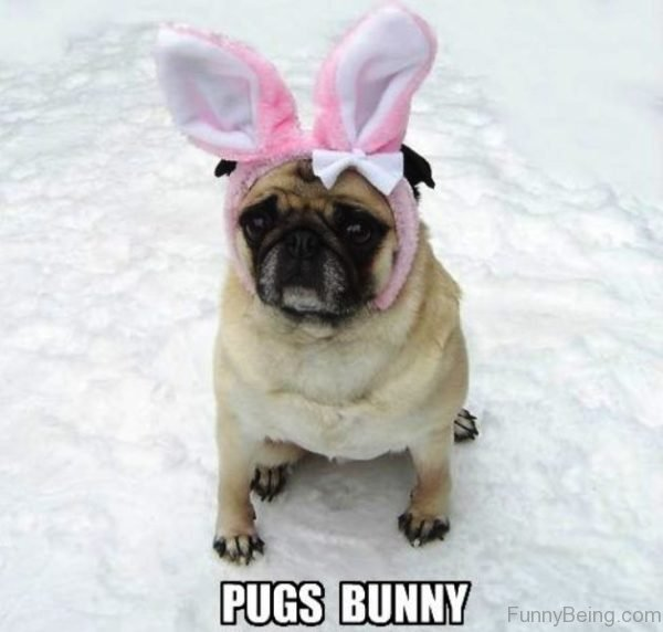 Pugs Bunny