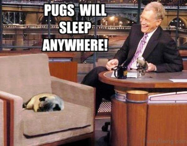 Pugs Will Sleep Anywhere