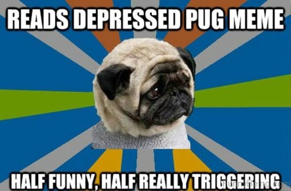 Reads Depressed Pug Meme