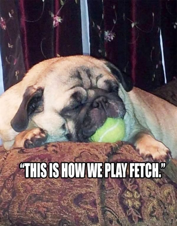 This Is How We Play Fetch