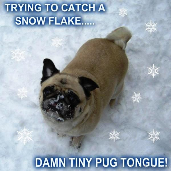 Trying To Catch A Snow Flake